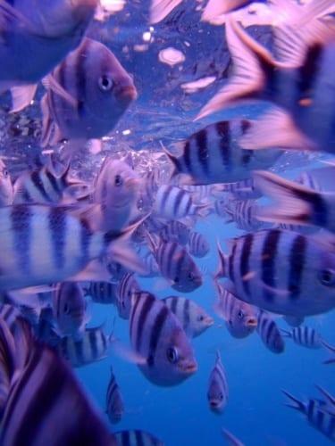 Fiji From Underwater